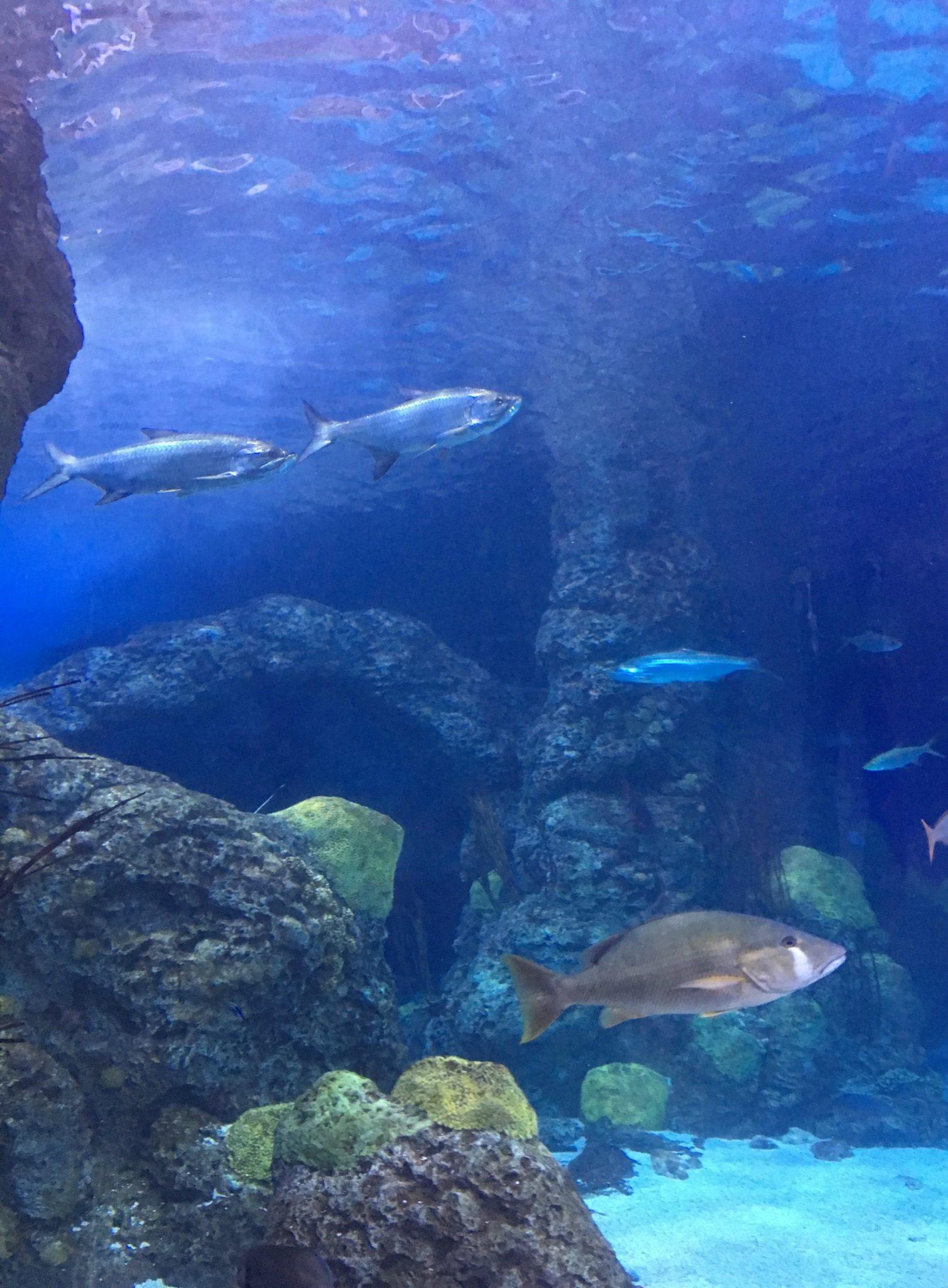Aquarium fish, Denver Downtown Aquarium with kids