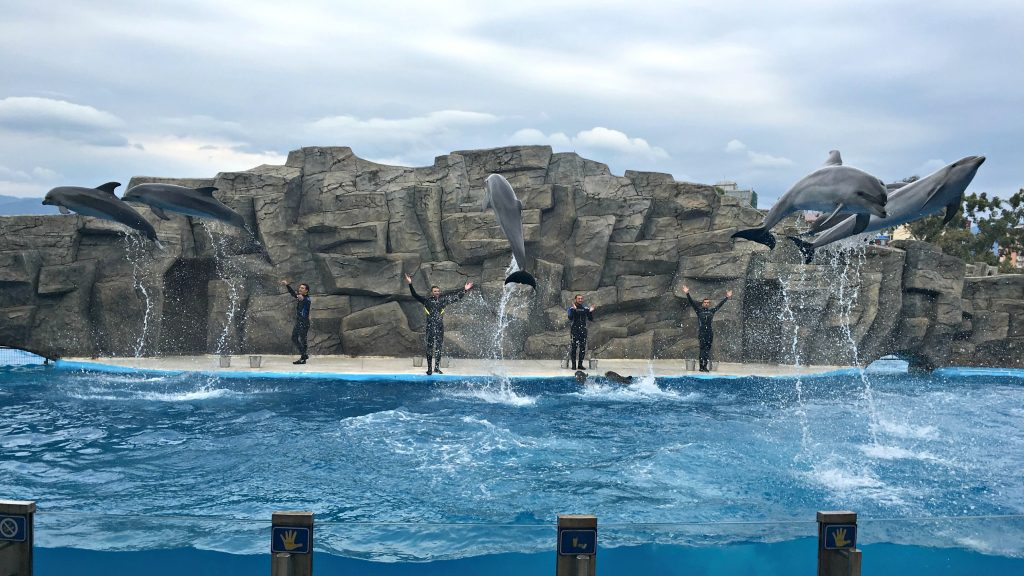 Dolphin jump feature