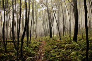 Shenandoah National Park, Virginia, for family travel and fun! #shenandoahnationalpark #familytravel