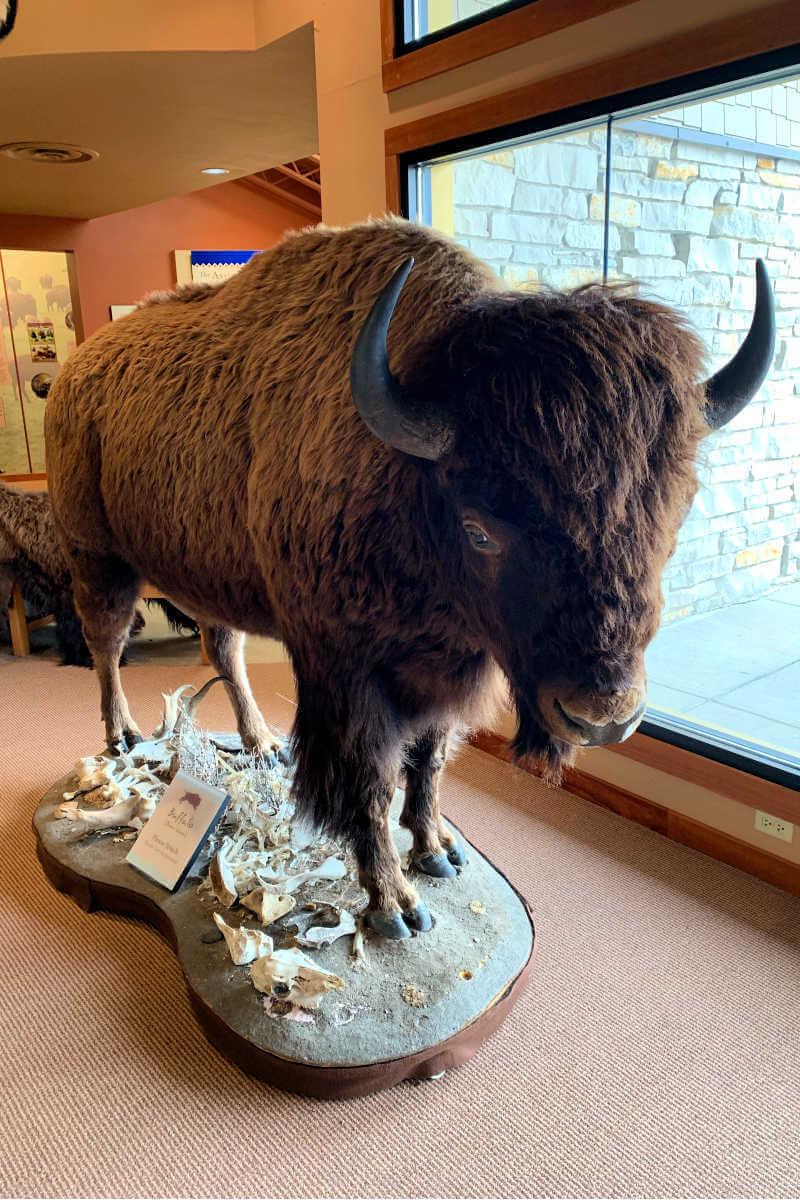 Buffalo Jump State Park, Great Falls MT #greatfallsmt #buffalojumpstatepark