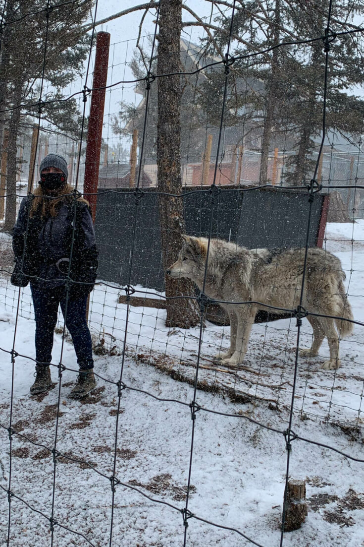 Guide at the Colorado Wolf and Wildlife Center