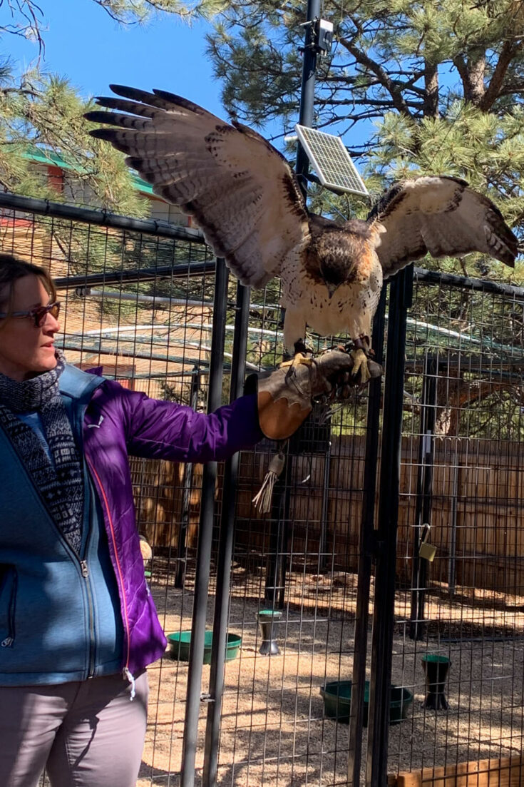 Falconry Experience at the Broadmoor