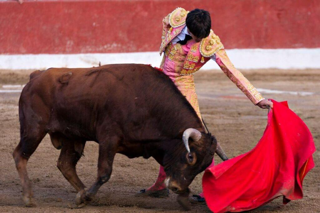 The matador bullfighter and bull